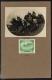 Nr. 181, Kriegswohltätigkeitsmarken 1915, Wert zu 5 Heller als Fotovorlage vor dem regulären Druck der Auflage hergestellt, sehr dekorativ